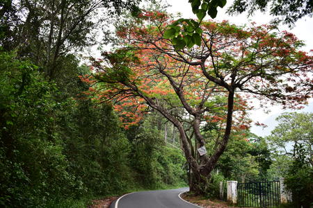 Munnar to Bodinayakanur Road Trip Colorful Trees
