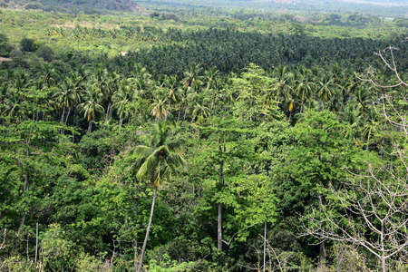 Kurangani In Tamil Nadu – The Hidden Beauty Of The Western Ghats