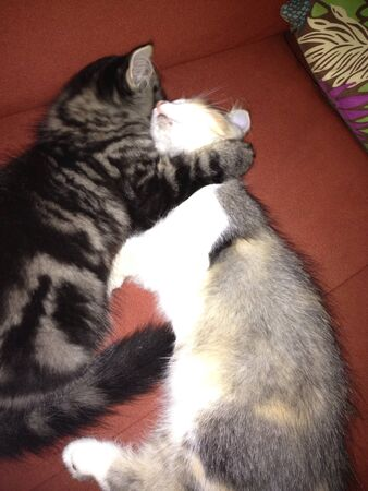 otganimalpets01: Brother hugging his sister