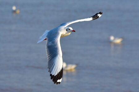 animal angelic: seagull Stock Photo