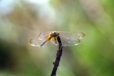 dragon fly: dragon fly standby Stock Photo