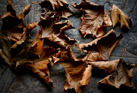 hojas secas: autumn dry  leaves - background