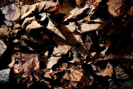 hojas secas: hojas secas de otoño - fondo