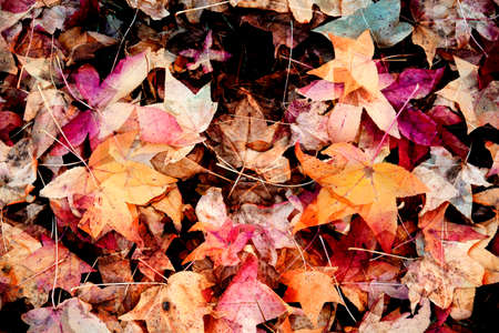 dry leaves: autumn dry  leaves - abstract colorful background
