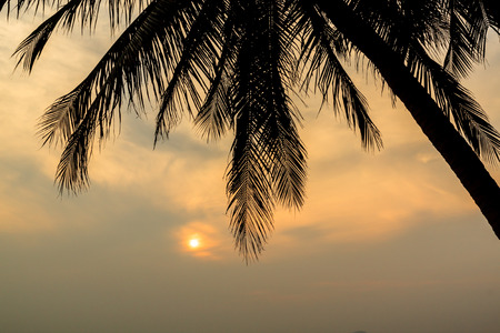 Palm Tree and Sunset at twilight time , Silhouette
