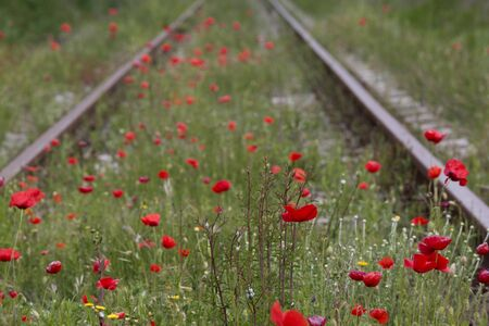 Rails with red poppy in between