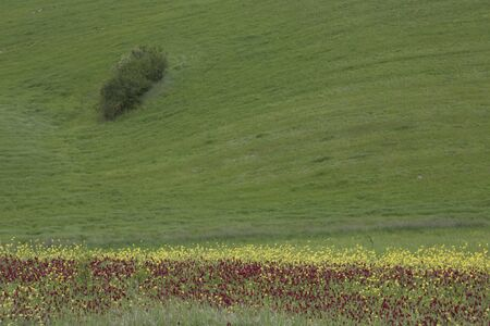 Wide meadow with red poppy in the foreground