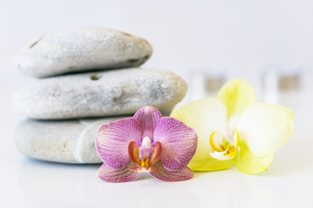 massage symbol: Fresh pink and yellow orchid near gray stones on a white background. Concept spa and relaxation. Stock Photo