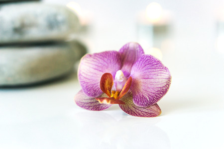 phalaenopsis: Fresh pink orchid near gray stones on a white background. Concept spa and relaxation.