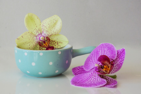 massage symbol: Fresh pink and yellow Phal?enopsis orchid and blue bowl on a white background. Concept spa and relaxation.