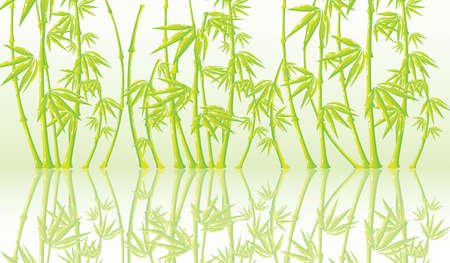 Beautiful vector background with a bamboo photo
