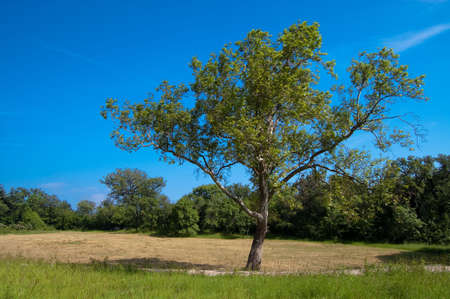 green country with tree