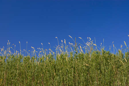 green fileds, the blue sky