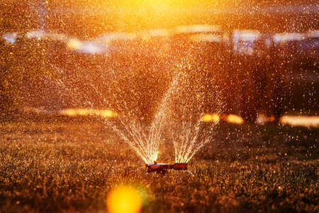 Lawn sprinkler spraying water over fresh lawn grass in a garden or backyard on a hot summer day. Automatic irrigation equipment, lawn care, gardening and tools Standard-Bild