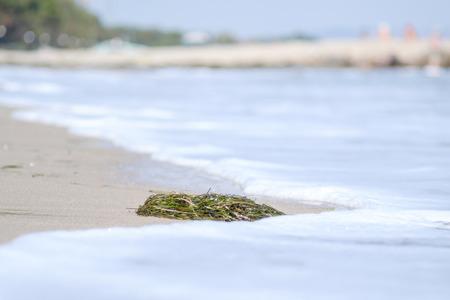 Seaweeds on the beach 1 Stock Photo