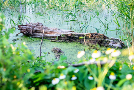 groundwater: Green swamp 1