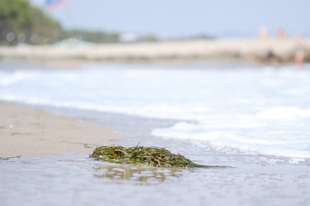 seaweeds: Seaweeds on the beach 2