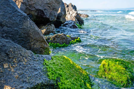 Green stones and sea 2
