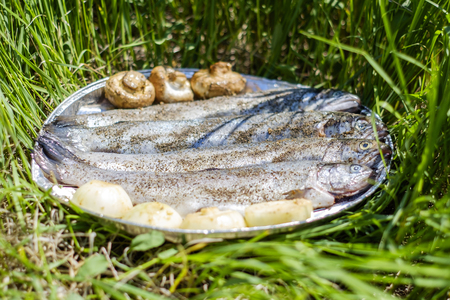 fish tail: Preparation of fresh trout fish BBQ in grass
