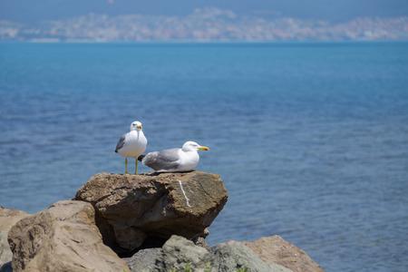 A couple of gulls sunbathing near the sea 5 Stock Photo