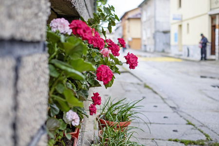 Flowers on wall of old city street