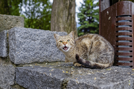 Angry city cat seated on stone