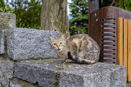 Angry city cat seated on stone 1