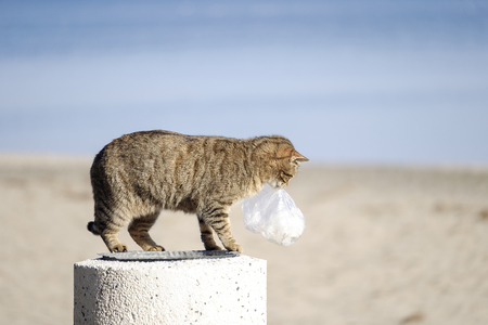Cat in search of food