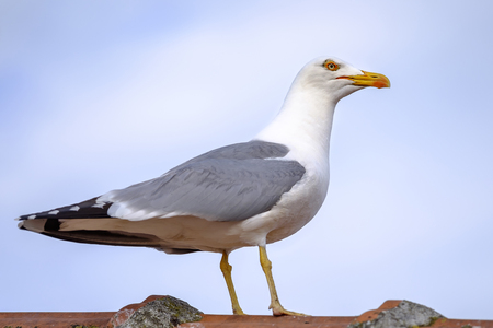 Seagull sitting at the top of the roof