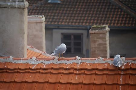 City gulls sleep on the tiled roof in winter Imagens