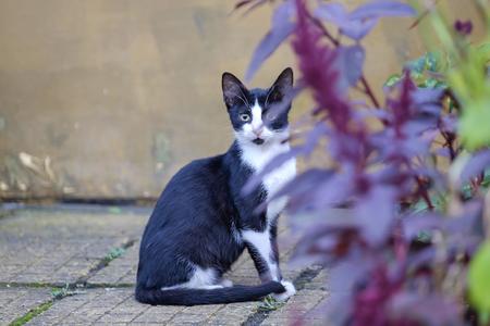 Portrait of a cute black cat near red bush 2