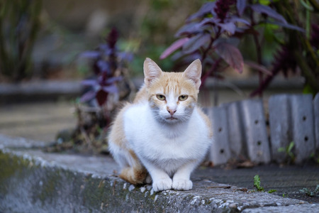 Portrait of a white-red cat on the sidewalk 3