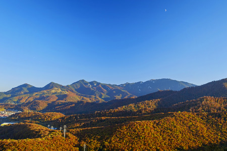 Mountains covered with orange trees landscape birds eye view 3 Imagens