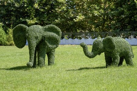 Elephants made from green trimmed bushes Stock fotó