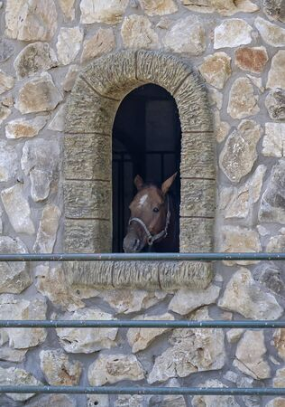 Sad horse in the stable window
