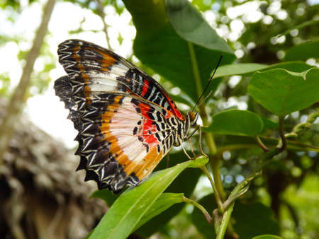 beautiful butterfly sits on a leave in the rain forest