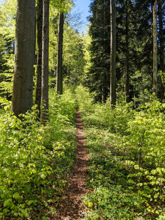 singel trail through the forest for hikers and bikers in the hilly landscape in switzerland. Spring time in Toesstal
