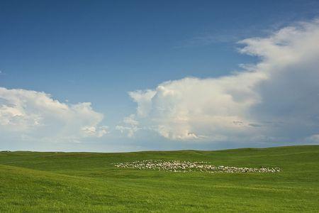 China's natural grassland Hulunbeier