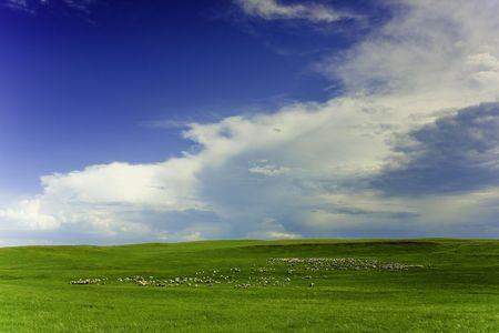 Hulunbeier prairie pasture in Inner Mongolia China photo