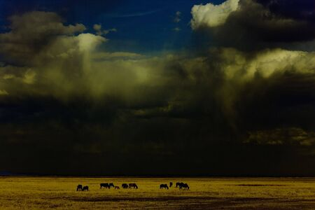 China's Inner Mongolia prairie Hulunbeier - Ranch