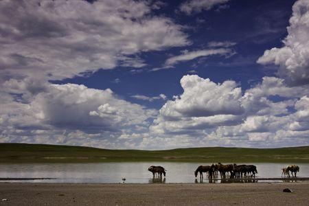 Mongolian horse photo