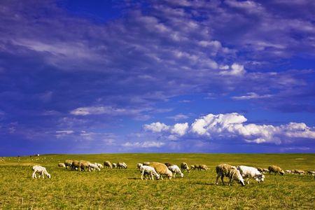 Ranch Stock Photo