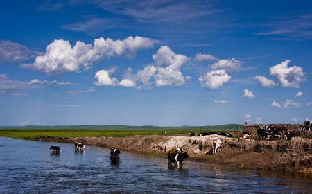 Inner Mongolia - Mongolian beef Stock Photo