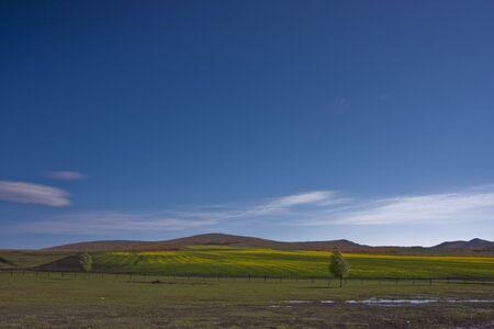 China - Inner Mongolia, rapeseed to Stock Photo