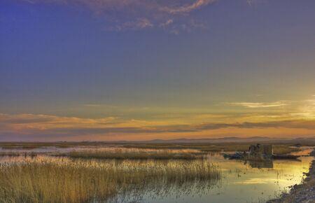 Reed - Wetlands
