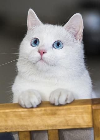 The white cat  Stock Photo