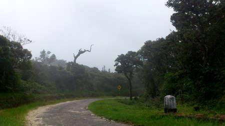 plains: Horton plains