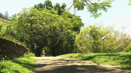 on the lonely road: Lonely road Peradeniya Sri Lanka