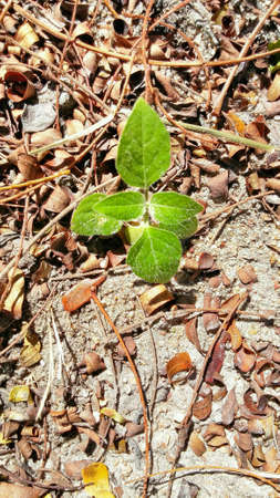 imminent: Leaves