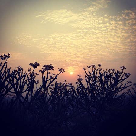 wish: Sunrise Stock Photo